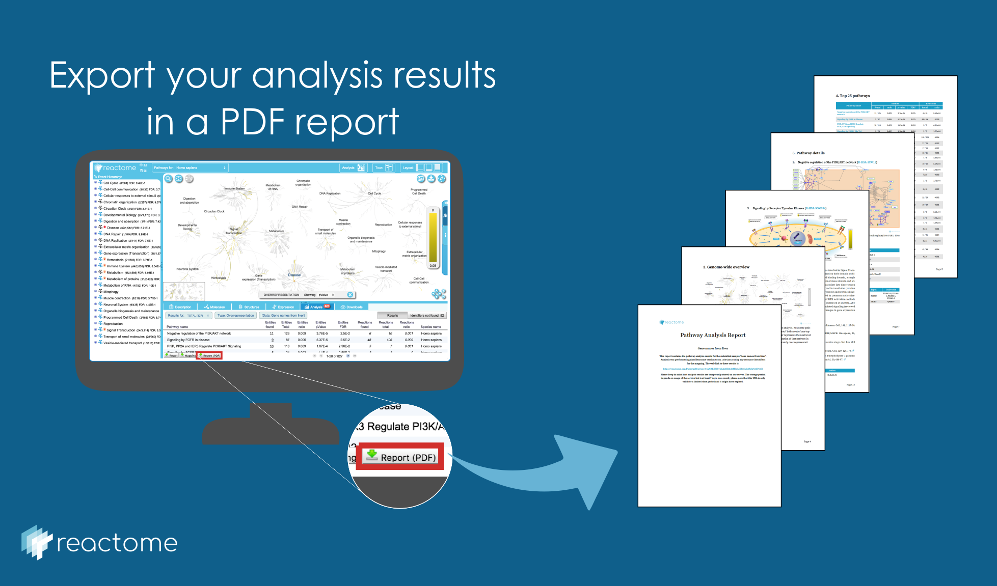 Analysis Report PDF