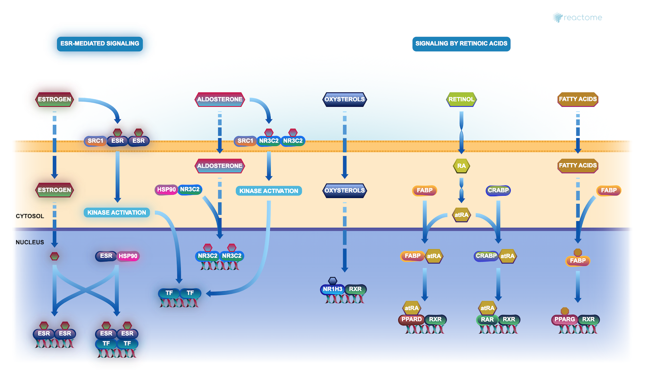 News - Reactome Pathway Database